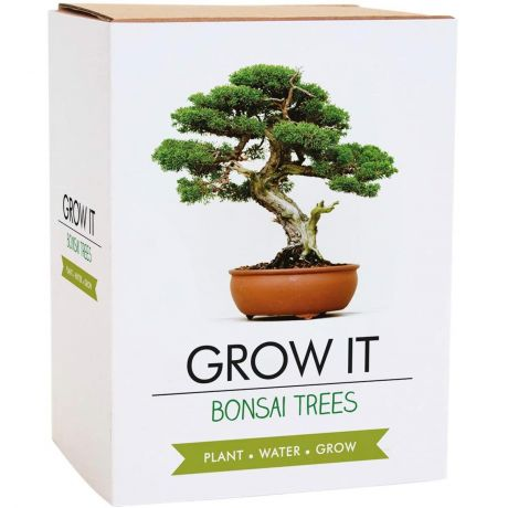 Grow It - Bonsai Trees Planting Starter Set